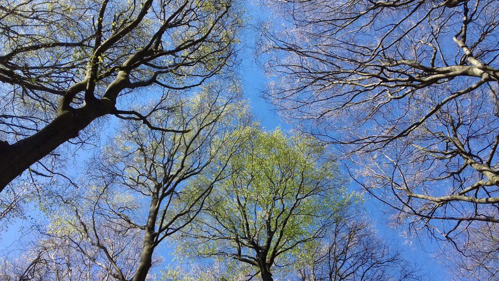 Foto: Blick in Baumkronen