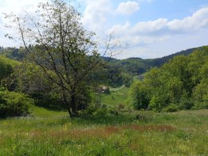 Foto: Brombachtal, Odenwald