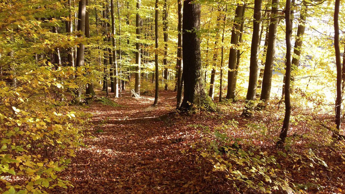 Foto: Herbstwald im Gassbachtal