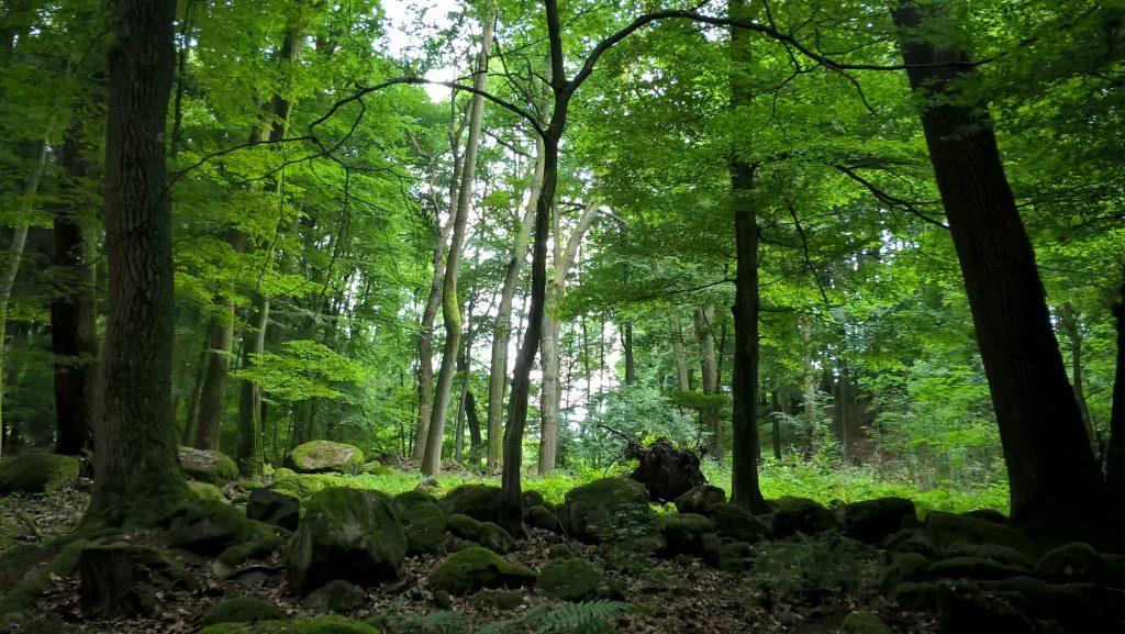 Foto: Felsformationen im Odenwald bei Laudenau