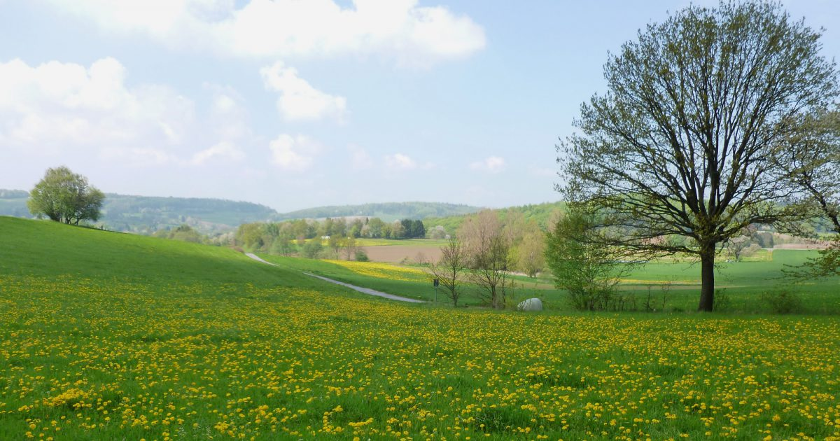 Foto: Odenwald bei Beedenkirchen, Odenwald