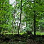 Foto: Mystische Steinsetzungen im Laubwald