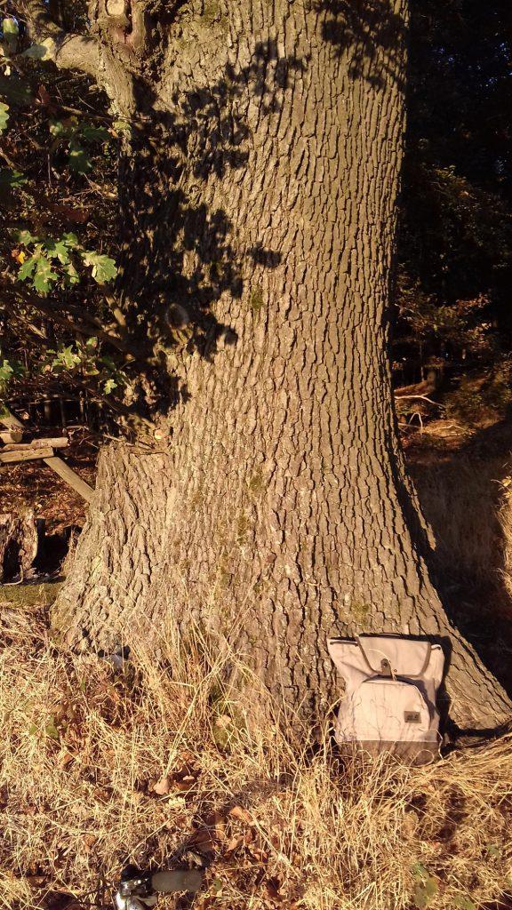 Foto: Tasche an Baum gelehnt