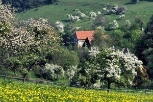 Foto: Bauerngehöfte im Odenwald