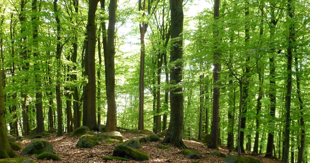 Foto: im Wald