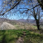 Frühlingsblüte an der Bergstraße